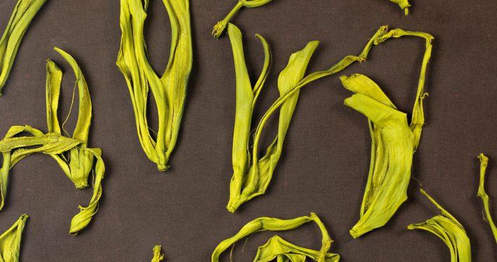 Ausgerechnet Bananen (II), Barbara Krupinski, 1998 (Ausschnitt)