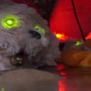 Thomas Silberhorn: Can't feed them - Video Still